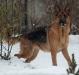 hunder-006
