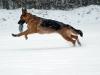 hunder-011