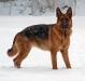 hunder-019