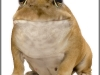 BullDogfrog_by_HumanDescent
