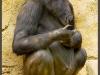 Horilla