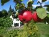 epler-i-hagen1